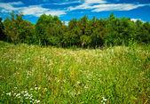 Güzel alan — Stok fotoğraf