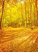 Scene in forest — Stock Photo