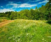 Nice field — Stock Photo