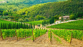 Vineyard with house — Stockfoto
