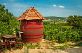 Barrel at the vineyard — Stock fotografie