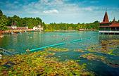 Lake Heviz in Hungary. — Stok fotoğraf