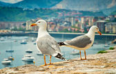 Seagulls in the city — Stock Photo