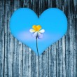 Heart shaped window on a wooden door to a flower — Stock Photo