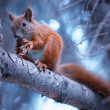 Squirrel with nut — Stock Photo #13270213