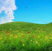 Flower field and blue sky — Stock Photo