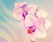 Orquídeas rosadas — Foto de Stock