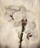 Textured old paper background with orchid — Stock Photo