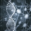 Stock Photo: DNA background