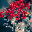 Red berry branches — Stock Photo