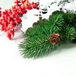 Pine cones with pine branches and red berry — Stok fotoğraf
