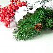 Pine cones with pine branches and red berry — Stock fotografie