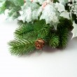 Pine branches and pine cones on white background - Stock Photo