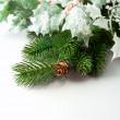 ramas de pino y piñas sobre fondo blanco — Foto de Stock