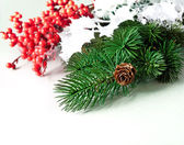 Pine cones with pine branches and red berry — Stock Photo
