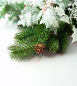 Pine branches and pine cones on white background — Stok fotoğraf