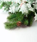 松の枝と白い背景の上のマツ円錐形 — ストック写真