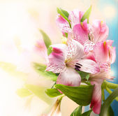Beautiful flowers background — Stock Photo