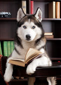 Dog with book — Stock Photo