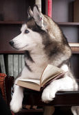 Dog with open book on table — Stock Photo