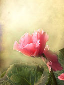 Textured old paper background with begonia flower — Stok fotoğraf