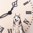 Dog and big clock — Stock Photo