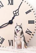 Dog and big clock — Stock Photo