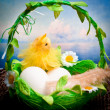 Royalty-Free Stock Photo: Easter chick and eggs in basket