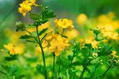 Garden in spring — Stock Photo