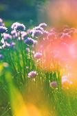 Hermosas flores silvestres — Foto de Stock