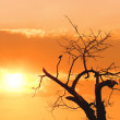 Silhouette tree against sunset — Stock Photo