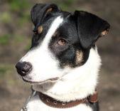 Pretty mixed breed dog — Stock Photo