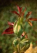 Texturou grunge pozadí s růžovou květinou — Stock fotografie