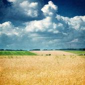Dokulu eski kağıt arka plan buğday alanı ile — Stok fotoğraf