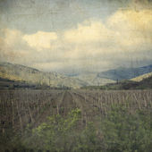 Landscape of vineyard — Stock Photo