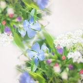 Beautiful blue flowers background — Stock Photo