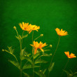 Yellow flowers over grunge green background — Stock Photo