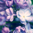 Lilac flowers background — Stock Photo #31931267