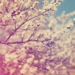Apple blossom vintage background — Stock Photo