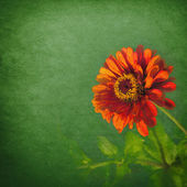Red flower over grunge green background — Stock Photo