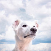 Close-up of mixed-breed white dog in front — Stock Photo