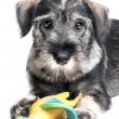 Dog with toy — Stock Photo #34878897