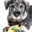 Dog with toy — Stock Photo