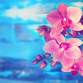 ορχιδέα λουλούδια — Φωτογραφία Αρχείου