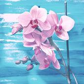 Fondo de la flor — Foto de Stock