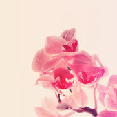 Orchid beautiful flowers — Stock Photo