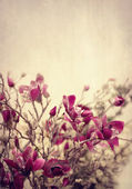 Textured grunge background with flowers — Stock Photo