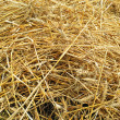 Background with dig mown wheat — Stock Photo