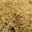 Background with dig mown wheat — Stock Photo #28184293
