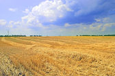 Field during harvest wheat — Stock Photo